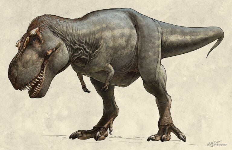 T-Rex Homeopático
